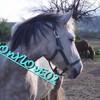 ponylove02