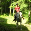 camargueti-chevaux