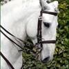 Horse-My-life43