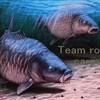 team-royal-carpe