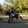 my-love-horse-my