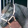 funny-pony-black