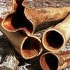 didgeridoo-17