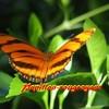 Papillon-rougeoyant