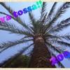 tossa-2006