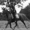 love-horse2711