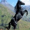 chevaux-dereve