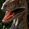 raptormix1