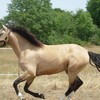 my-passion-is-cheval