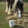 love-you-horses