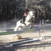 margothorse