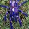spiderboy92
