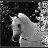 chevauxd3reve