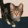 le-chat-noir21