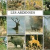 chasse-ardennes