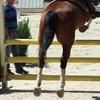 stephorse1815