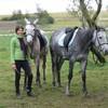 horsemargue