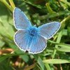 papillon9609