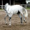 pixxy-horses-concours