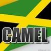 camel972