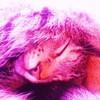 Katzenkoenigin