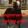 kinghorse45