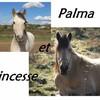 Palma-Princesse