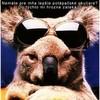 koala-4ever