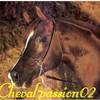 Cheval-passion02