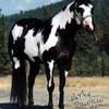 chevaux-love-34