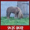 Sunny-Sacre-Coeur