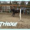 tritou1233