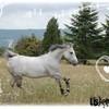 listen-horse