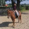 love-horses--x3