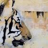 tigresanga