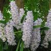 beauty13orchids