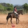 x-My-Videos-Horses-x