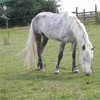 lovehorses27