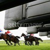 chevaux-jockeydusudouest