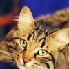catgirl46