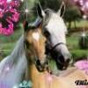 Xxjtm-horse-jtmxX