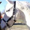 xx-Horse-of-dream-xx
