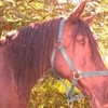 poney-a-pois