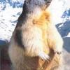 marmotteismylife