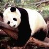 Hello-Pandawah