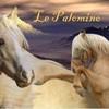 HorseGirlz417