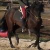 chevaux46
