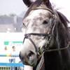 HorseForeverO