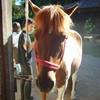 ma-passion-chevaux-du-46