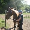 fan-des-chevaux56